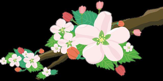 Les différentes fleurs et leur propriétés